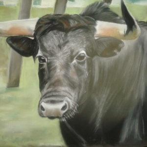 Toro - Pastel / 50X65  vendido